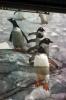 Antarktiskreuzfahrt 2010